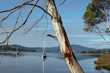 The Huon River at Jackson's Point. Franklin